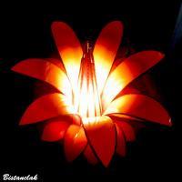 Fleur lumineuse