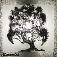 applique blanche et noire au dessin d un arbre bonsai